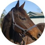 Equine Assisted Therapy Melbourne
